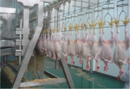 Chicken plucker for poultry abattoir poultry slaughter machine chicken feather removing machine